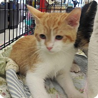 Adopt A Pet :: Prancer - Alamo, CA
