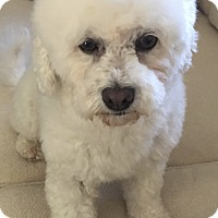 Adopt A Pet :: Pearl - Encino, CA