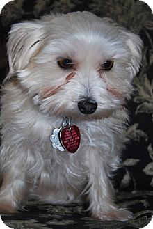 Yorkie Mix Rescue Jacksonville Fl | Dog Breeds Picture