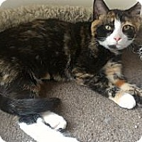 Adopt A Pet :: Beyonce Knowles - Richboro, PA