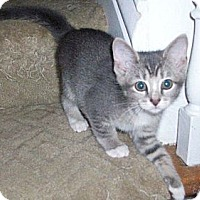 Adopt A Pet :: Jerry - New Richmond, OH