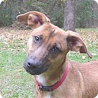 Adopt A Pet :: Leah - Mocksville, NC