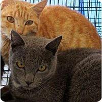 Adopt A Pet :: Chuck - Mobile, AL