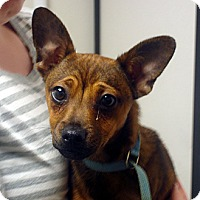 Adopt A Pet :: Charlie - baltimore, MD