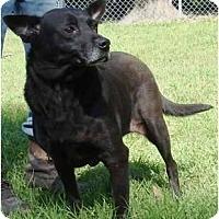 Adopt A Pet :: Tara - Havana, FL