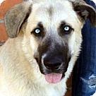 Adopt A Pet :: ZANDER (video)