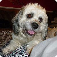 Adopt A Pet :: Chris - Hamilton, ON