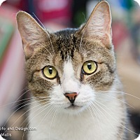 Adopt A Pet :: Danny - Fountain Hills, AZ