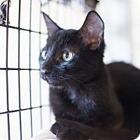 Adopt A Pet :: Wobbles - Chicago, IL