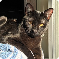 Adopt A Pet :: Hugo - Richmond, VA