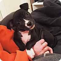 Adopt A Pet :: Kendall - Nashville, TN