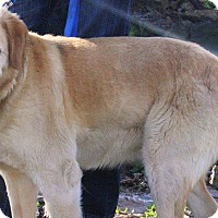 Adopt A Pet :: Polly - Joplin, MO