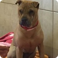 Adopt A Pet :: Rue - Gainesville, FL