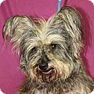 Adopt A Pet :: Princess Lea