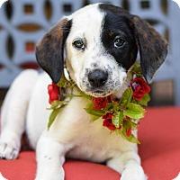 Adopt A Pet :: Mona - Baton Rouge, LA