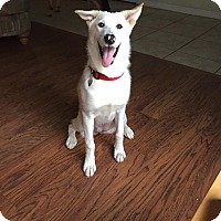 Adopt A Pet :: Diamond - Ormond Beach, FL