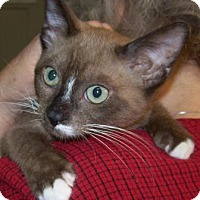 Adopt A Pet :: Siami - Picayune, MS
