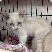 Adopt A Pet :: Yul - Tehachapi, CA