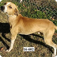 Adopt A Pet :: Cato - Cannelton, IN