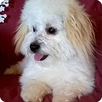 Adopt A Pet :: Roman - Campbell, CA