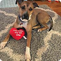 Adopt A Pet :: Ringo - Spring Lake, NJ
