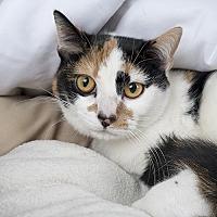 Adopt A Pet :: Tostada - Wilmington, DE