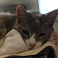 Adopt A Pet :: Lotus - Lafayette, NJ