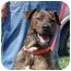 Photo 1 - Great Dane/Labrador Retriever Mix Dog for adoption in DuQuoin, Illinois - Dino