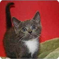 Adopt A Pet :: JULIE - SILVER SPRING, MD