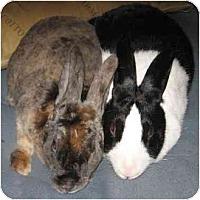 Adopt A Pet :: Abbott - Santee, CA