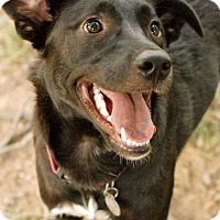 Adopt A Pet :: Onyx Pup - Knoxville, TN