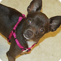 Adopt A Pet :: Pebbles - Franklin, VA
