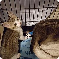 Adopt A Pet :: Frankie Fun loving boy! - Berkeley Hts, NJ