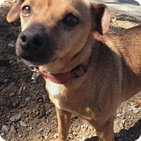 Adopt A Pet :: Willie - Fallbrook, CA