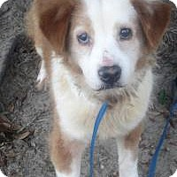 Adopt A Pet :: Fuzzy - Darien, GA