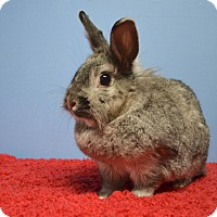 Adopt A Pet :: Elsie - Fountain Valley, CA