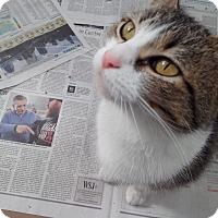 Adopt A Pet :: Jenova - Covington, KY
