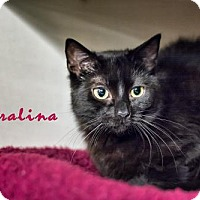 Adopt A Pet :: Koralina - Albuquerque, NM