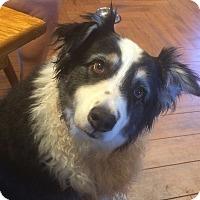 Adopt A Pet :: NITRO - San Pedro, CA
