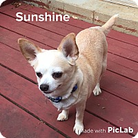 Adopt A Pet :: Sunshine - Knoxville, TN
