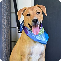 Adopt A Pet :: Hank - Baton Rouge, LA