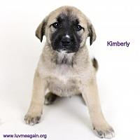Adopt A Pet :: Kimberly - Needs Foster - Bloomington, MN