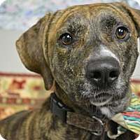 Adopt A Pet :: Bertram Copeland - Troy, MI