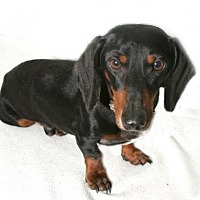 Adopt A Pet :: Huck - Pearland, TX