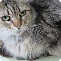 Adopt A Pet :: Mitsy - Coos Bay, OR