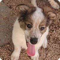 Adopt A Pet :: Xavier - Phoenix, AZ