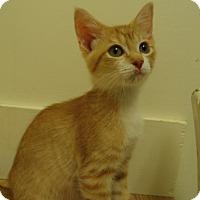 Adopt A Pet :: Paxton - Milwaukee, WI