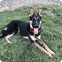 Adopt A Pet :: Reina - Pleasant Grove, CA