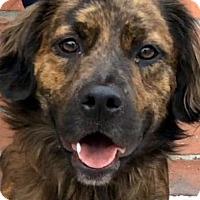 Adopt A Pet :: TOKYO (VIDEO) - Los Angeles, CA