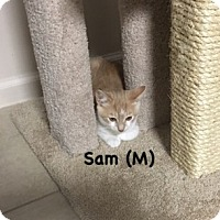 Adopt A Pet :: Sam - West Orange, NJ
